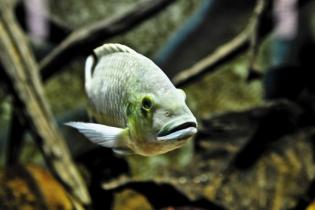 Besuch im Aquarium